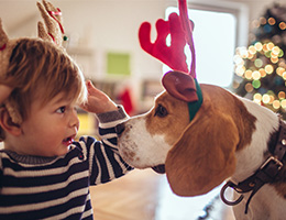 Holiday food can be deadly for your dog