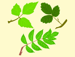 How to identify 3 poisonous plants